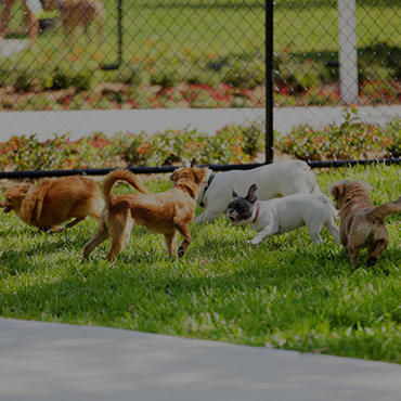 Large Dog Park at Riverbank Apartments